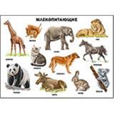 Плакат Млекопитающие (А2), (Проф-Пресс, 2014), Л, c.1
